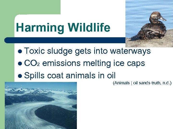 Harming Wildlife l Toxic sludge gets into waterways l CO 2 emissions melting ice