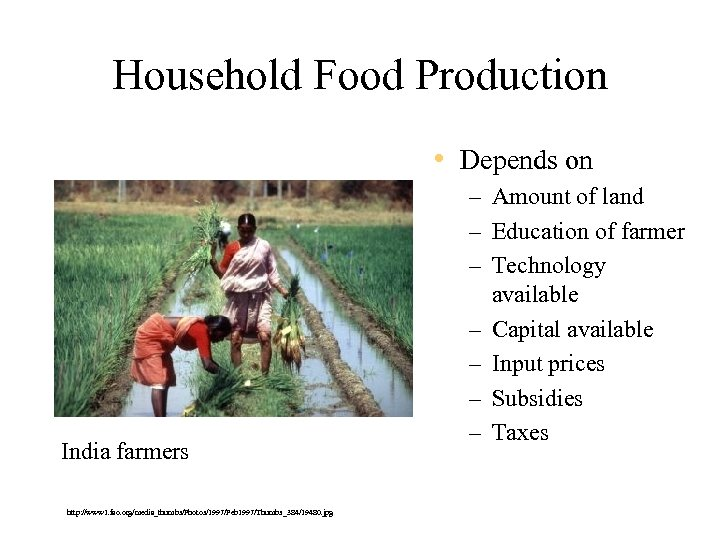 Household Food Production • Depends on India farmers http: //www 1. fao. org/media_thumbs/Photos/1997/Feb 1997/Thumbs_384/19480.