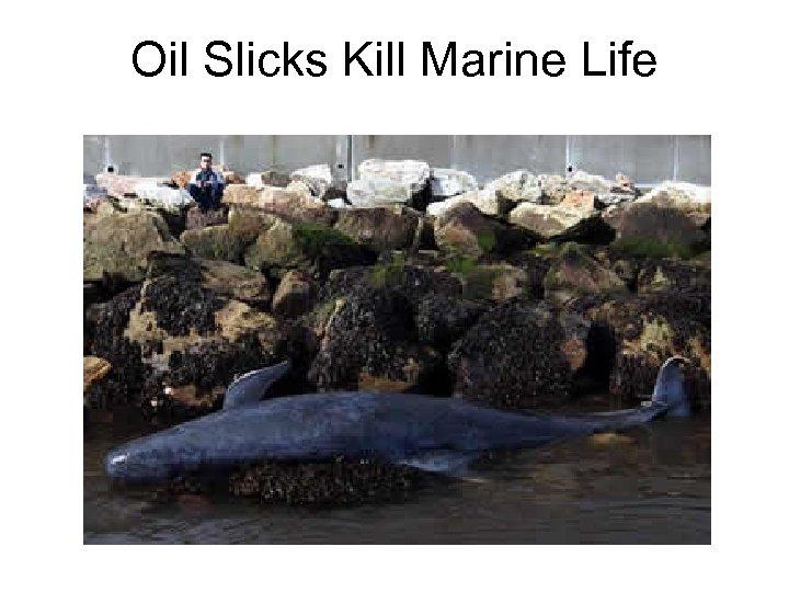 Oil Slicks Kill Marine Life