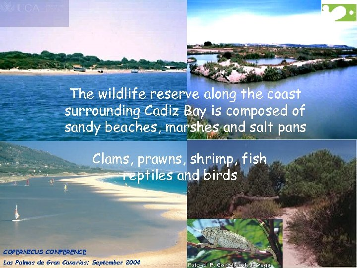 The wildlife reserve along the coast surrounding Cadiz Bay is composed of sandy beaches,