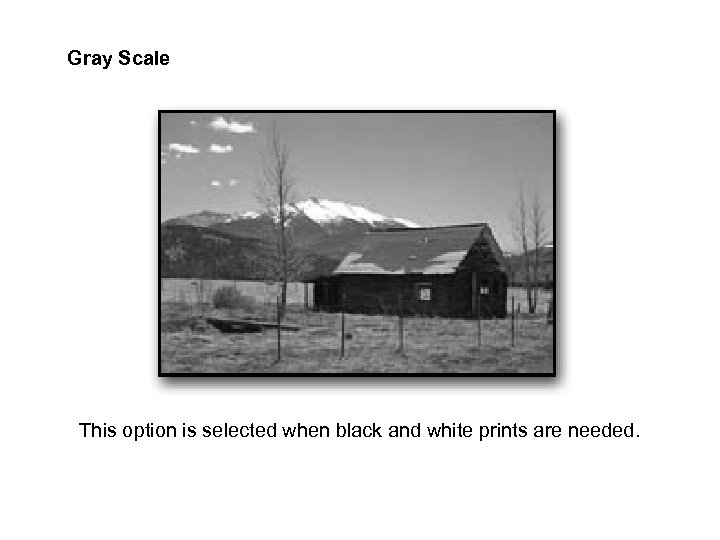 Gray Scale This option is selected when black and white prints are needed.
