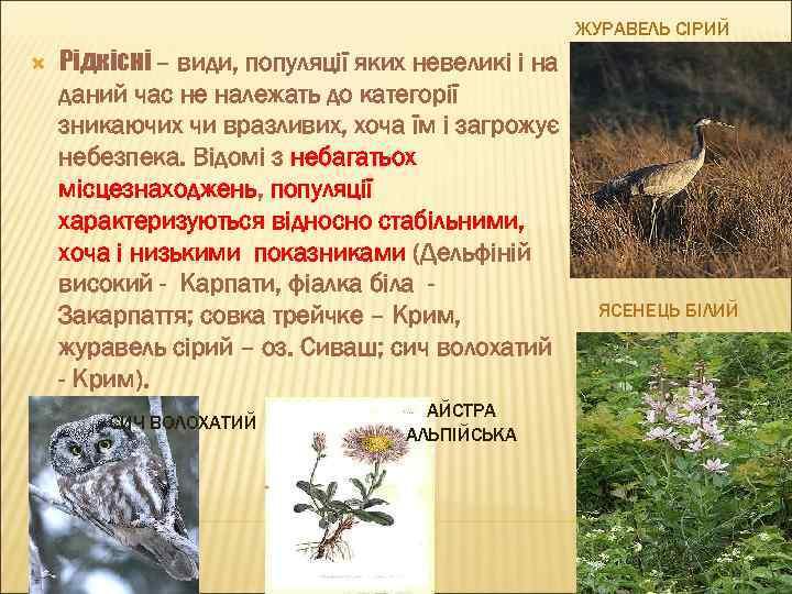 ЖУРАВЕЛЬ СІРИЙ Рідкісні – види, популяції яких невеликі і на даний час не належать