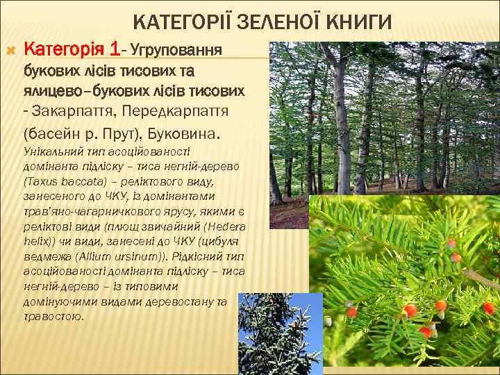 КАТЕГОРІЇ ЗЕЛЕНОЇ КНИГИ Категорія 1 - Угруповання букових лісів тисових та ялицево–букових лісів тисових