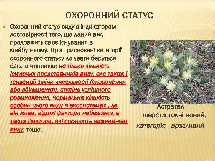 ОХОРОННИЙ СТАТУС Охоронний статус виду є індикатором достовірності того, що даний вид продовжить своє