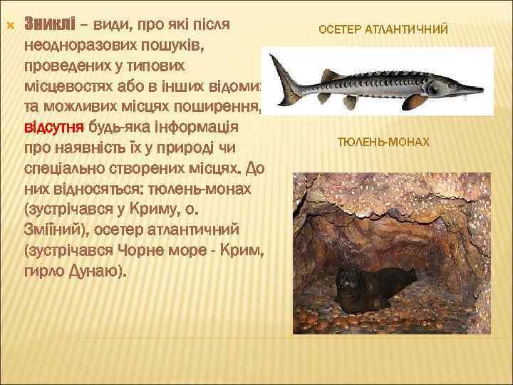 Зниклі – види, про які після неодноразових пошуків, проведених у типових місцевостях або
