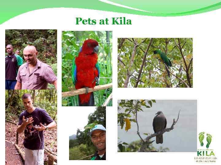 Pets at Kila