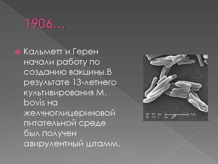 1906… Кальметт и Герен начали работу по созданию вакцины. В результате 13 -летнего культивирования