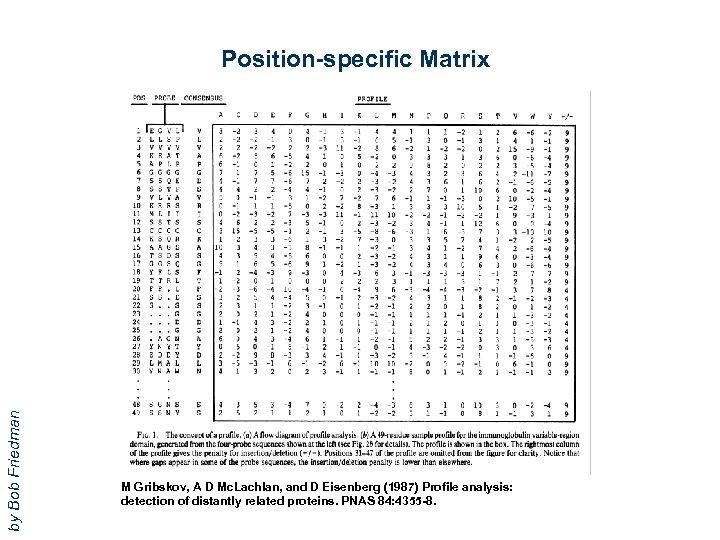 by Bob Friedman Position-specific Matrix M Gribskov, A D Mc. Lachlan, and D Eisenberg