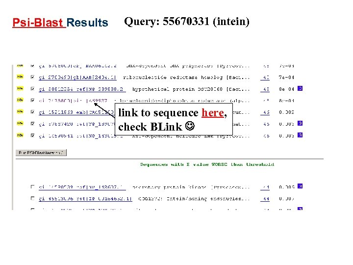 Psi-Blast Results Query: 55670331 (intein) link to sequence here, check BLink