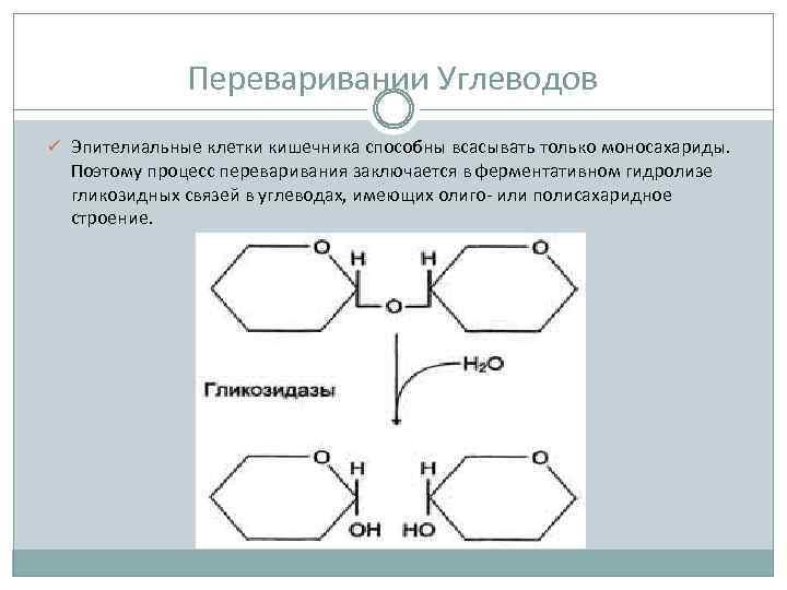 Переваривании Углеводов ü Эпителиальные клетки кишечника способны всасывать только моносахариды. Поэтому процесс переваривания заключается