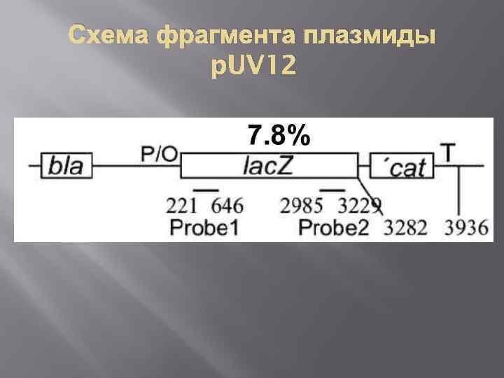 Схема фрагмента плазмиды p. UV 12