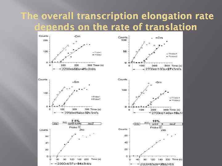 The overall transcription elongation rate depends on the rate of translation