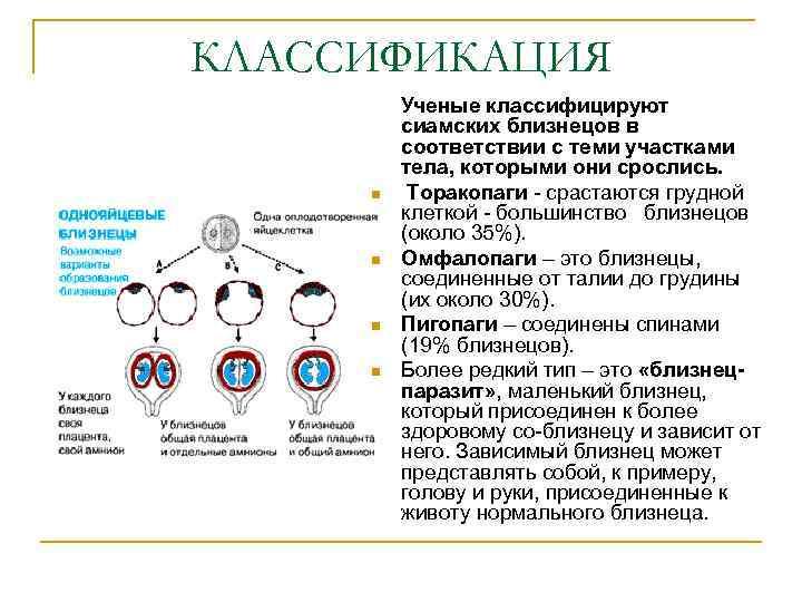 КЛАССИФИКАЦИЯ Ученые классифицируют сиамских близнецов в соответствии с теми участками тела, которыми они срослись.