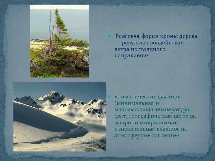Флаговая форма кроны дерева — результат воздействия ветра постоянного направления климатические факторы (минимальная