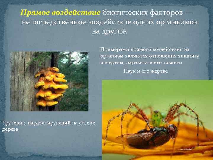 Прямое воздействие биотических факторов — непосредственное воздействие одних организмов на другие. Примерами прямого воздействия