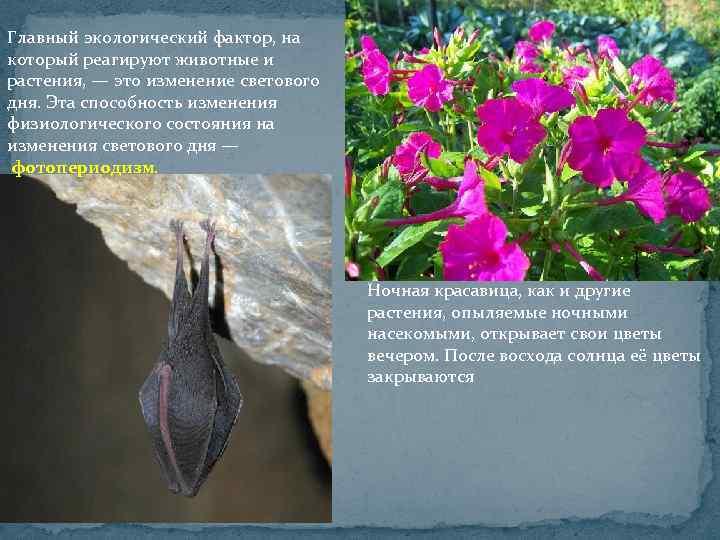 Главный экологический фактор, на который реагируют животные и растения, — это изменение светового дня.