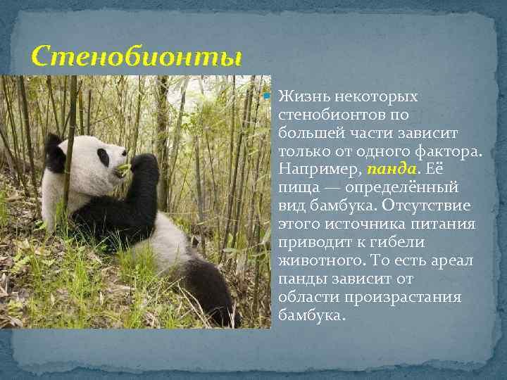 Стенобионты Жизнь некоторых стенобионтов по большей части зависит только от одного фактора. Например, панда.
