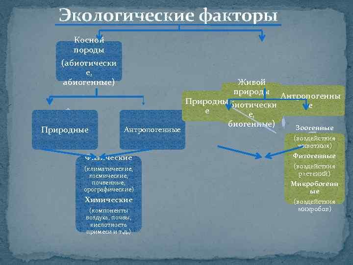 Экологические факторы Косной породы (абиотически е, абиогенные) Природные Антропогенные Физические (климатические, космические, почвенные, орографические)