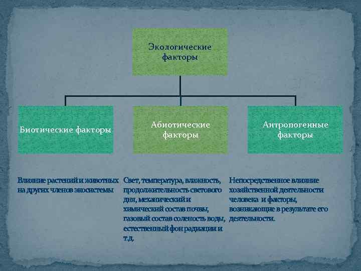 Экологические факторы Биотические факторы Абиотические факторы Антропогенные факторы Влияние растений и животных Свет, температура,