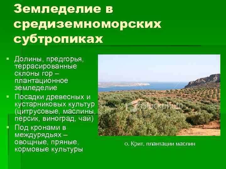 Что характерно для субтропиков выращивание цитрусовых культур 84