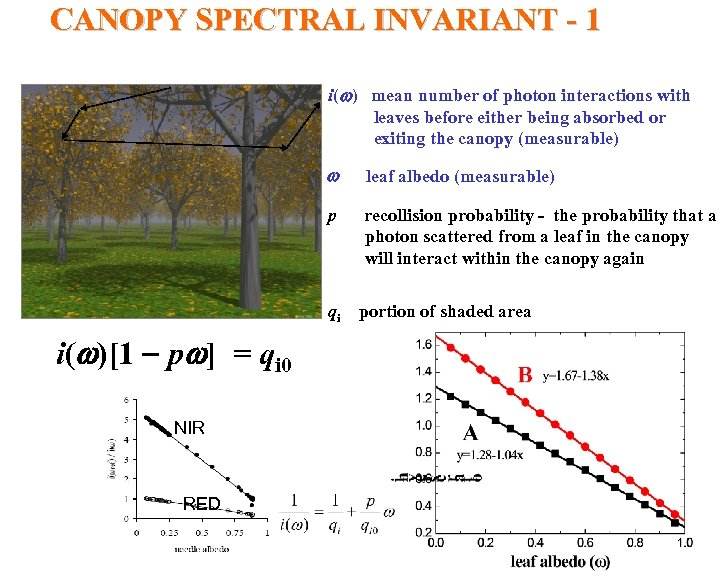 CANOPY SPECTRAL INVARIANT - 1 i(w) mean number of photon interactions with leaves before