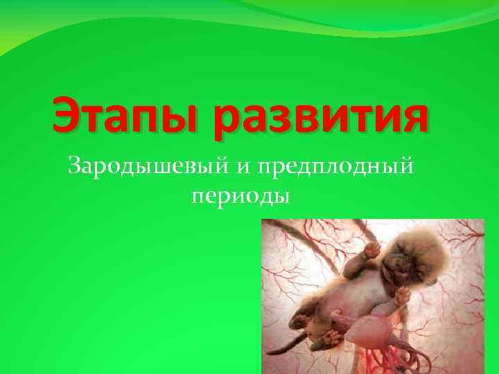 Этапы развития Зародышевый и предплодный периоды