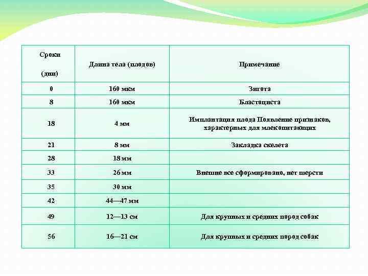 Сроки Длина тела (плодов) Примечание 0 160 мкм Зигота 8 160 мкм Бластоциста 18