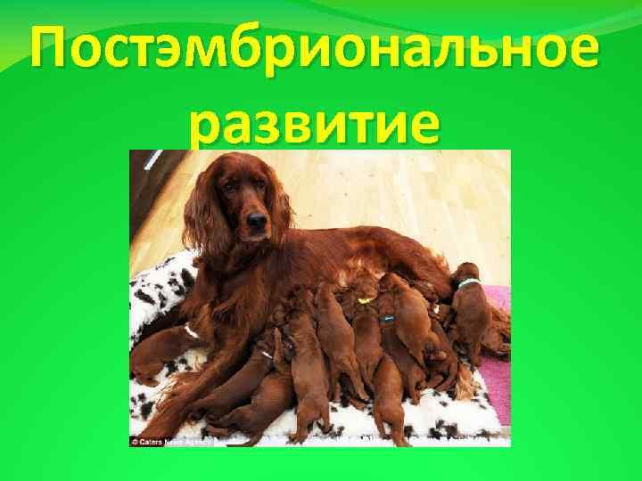 Постэмбриональное развитие