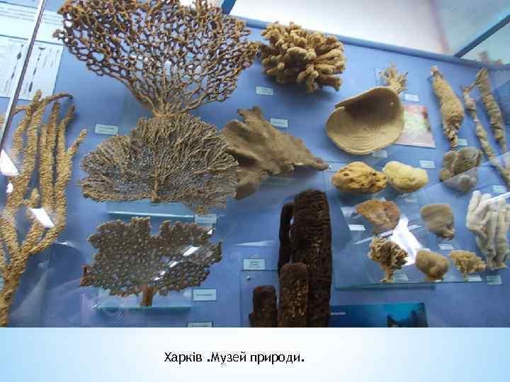 Харків. Музей природи.