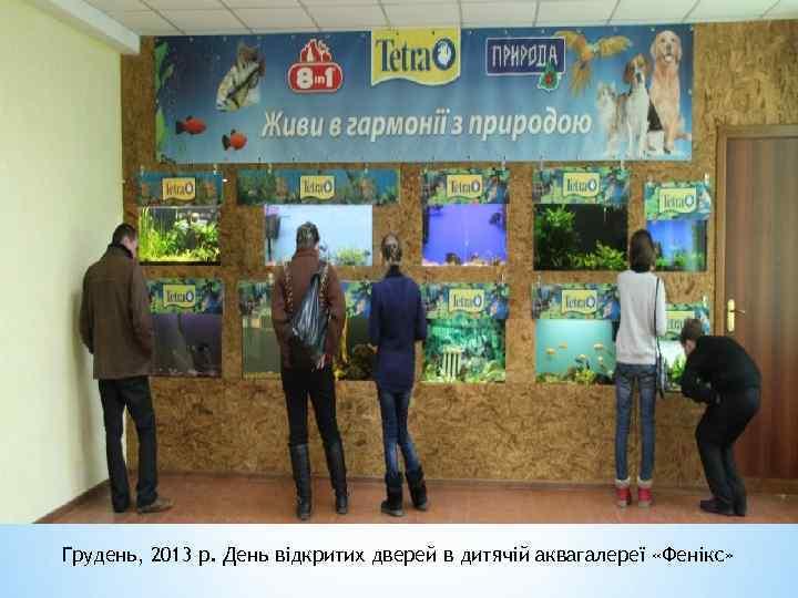 Грудень, 2013 р. День відкритих дверей в дитячій аквагалереї «Фенікс»
