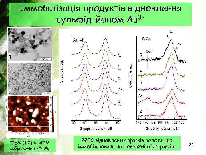 Іммобілізація продуктів відновлення сульфід-йоном Au 3+ ПЕМ (1, 2) та АСМ зображення НЧ Au