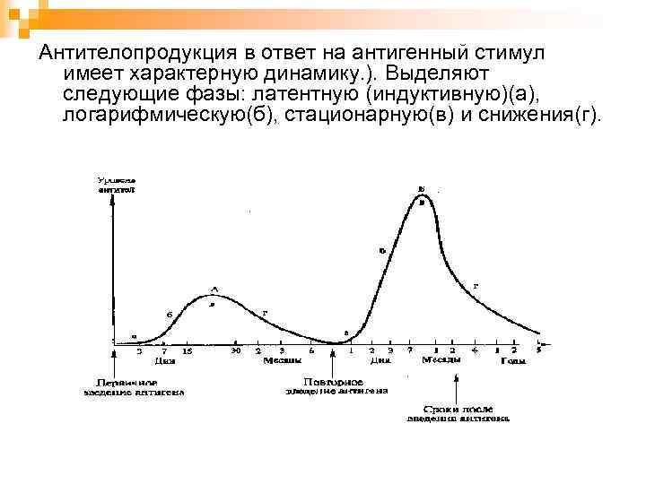 Антителопродукция в ответ на антигенный стимул имеет характерную динамику. ). Выделяют следующие фазы: латентную