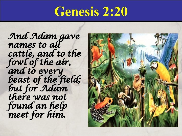 Genesis 2: 20 And Adam gave names to all cattle, and to the fowl