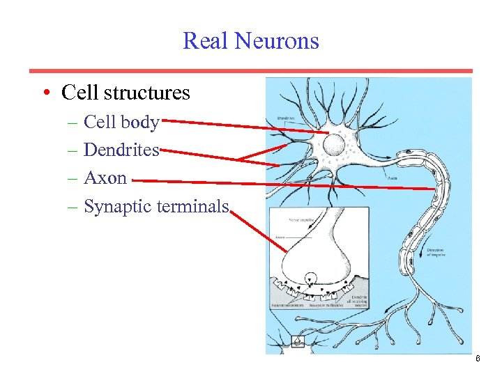 Real Neurons • Cell structures – Cell body – Dendrites – Axon – Synaptic