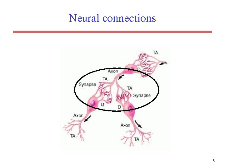Neural connections 8