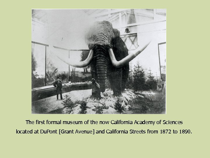 The first formal museum of the now California Academy of Sciences located at Du.