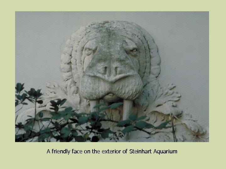 A friendly face on the exterior of Steinhart Aquarium