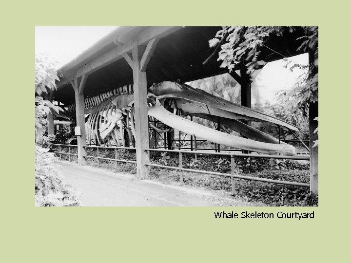 Whale Skeleton Courtyard