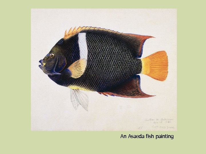 An Asaeda fish painting
