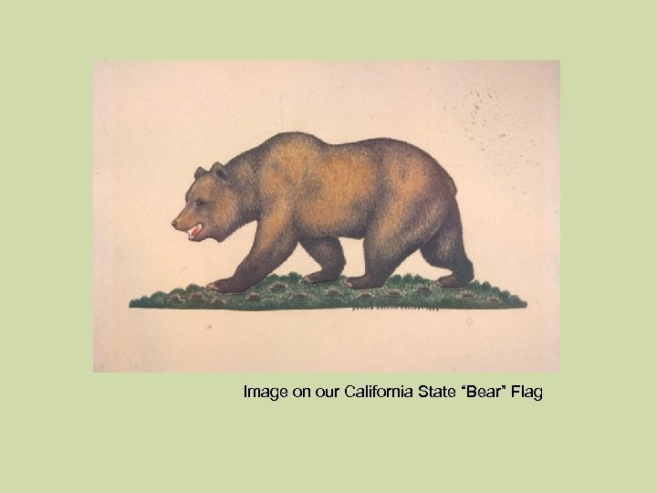 """Image on our California State """"Bear"""" Flag"""