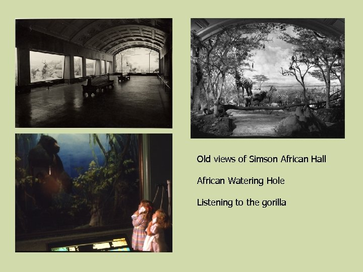 Old views of Simson African Hall African Watering Hole Listening to the gorilla