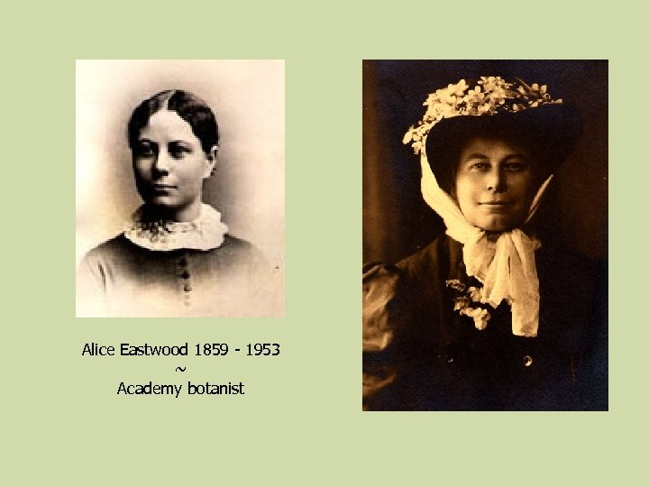 Alice Eastwood 1859 - 1953 ~ Academy botanist