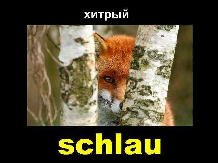 хитрый schlau