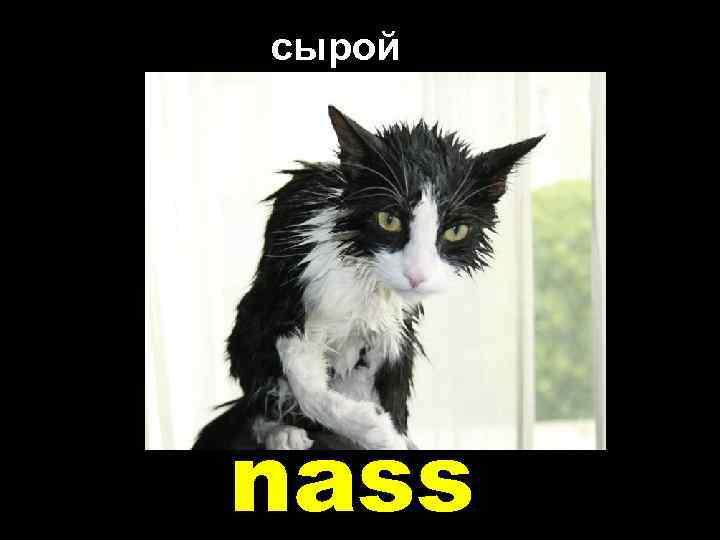 сырой nass