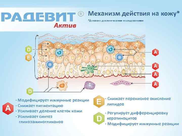 Механизм действия на кожу* *Доказано доклиническими исследованиями - Модифицирует иммунные реакции - Снижает пигментацию