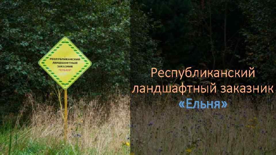 Республиканский ландшафтный заказник «Ельня»