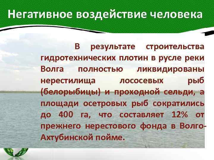 Негативное воздействие человека В результате строительства гидротехнических плотин в русле реки Волга полностью ликвидированы