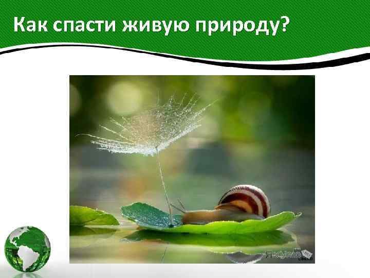 Как спасти живую природу?