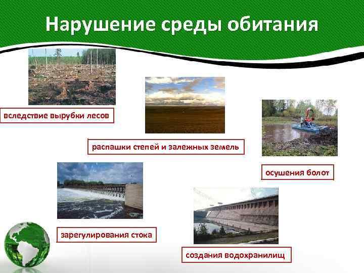 Нарушение среды обитания вследствие вырубки лесов распашки степей и залежных земель осушения болот зарегулирования