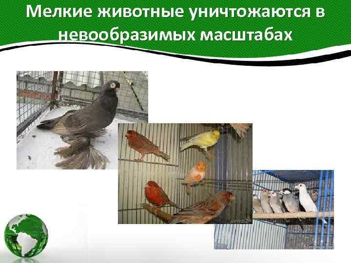 Мелкие животные уничтожаются в невообразимых масштабах